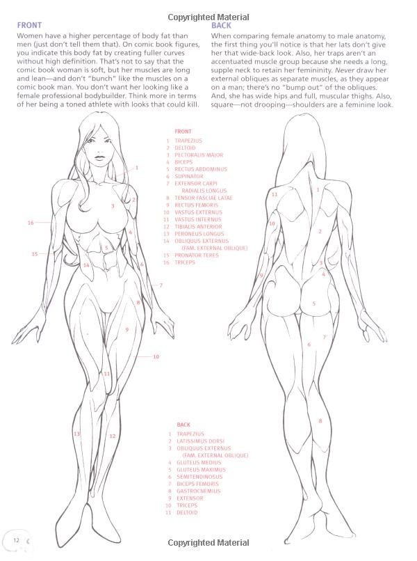 Anatomy Book For Artists