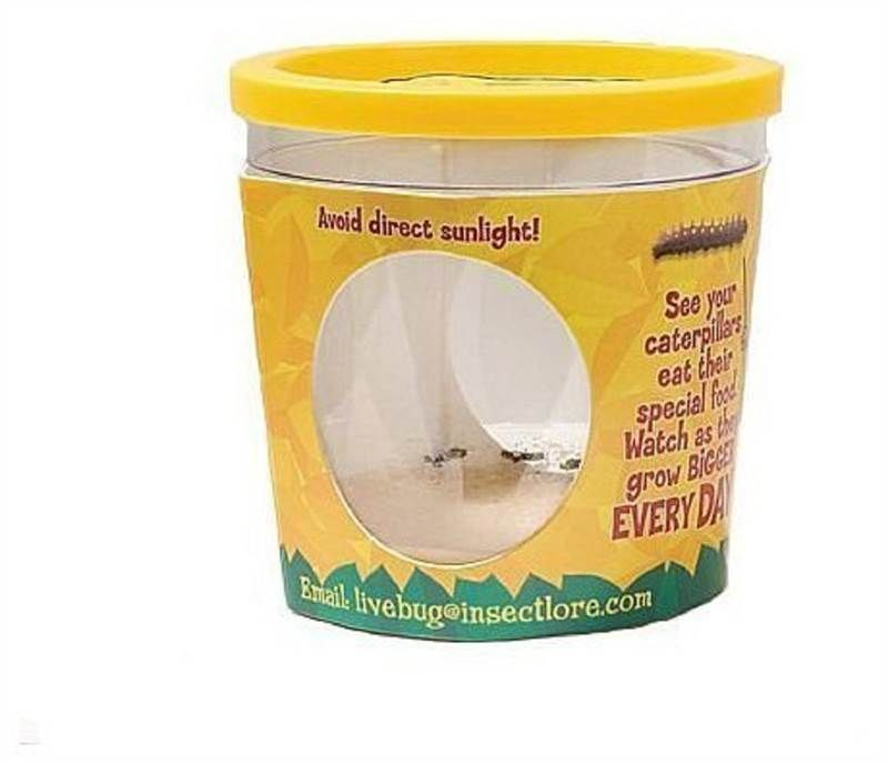 Insect lore live erfly garden & pavilion refill kit - 5 ...