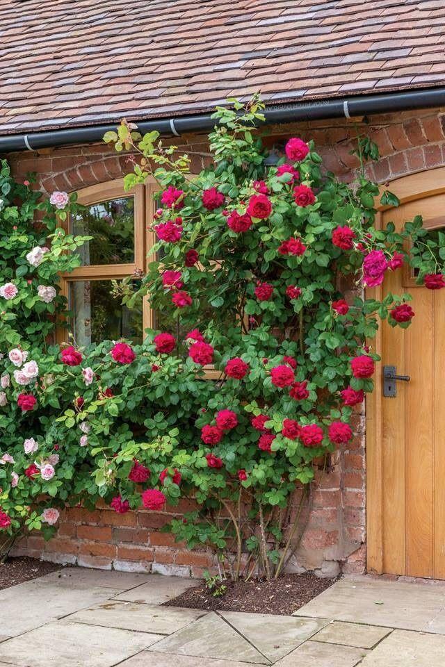 Pin de jjjjjj en Розы Plantas