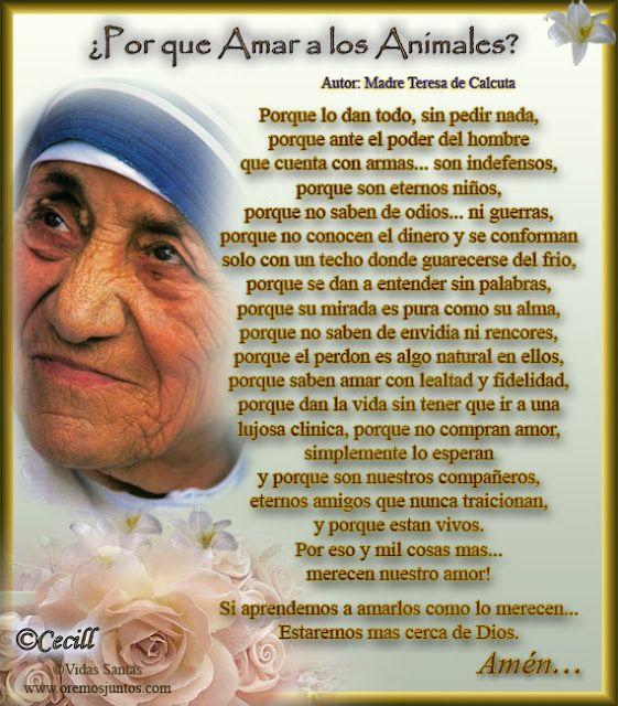 Vidas Santas Por Que Amar A Los Animales Por Madre Teresa De Frases De La Madre Teresa Madre Teresa Teresa De Calcuta Frases