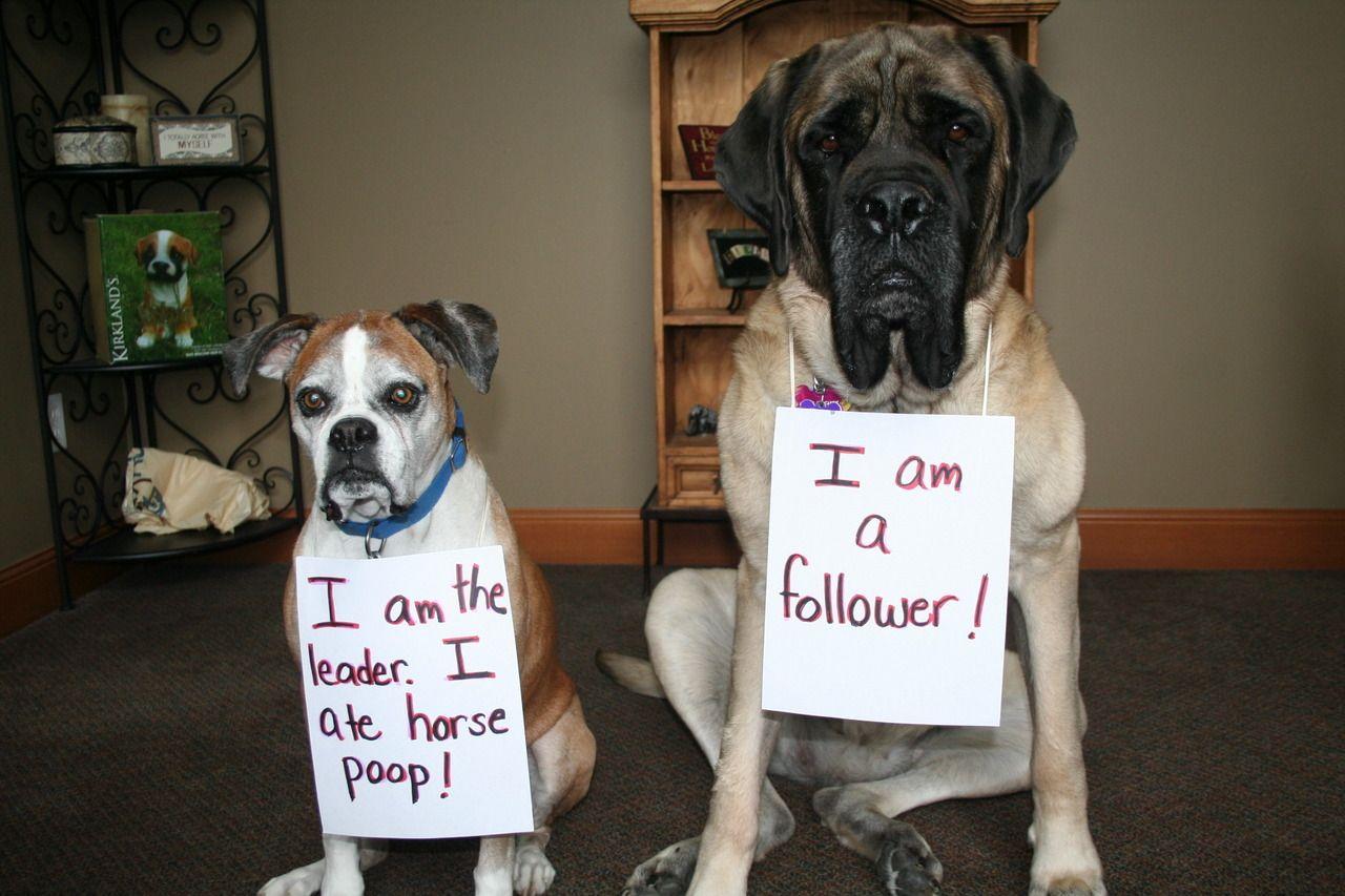 Dog Shame |