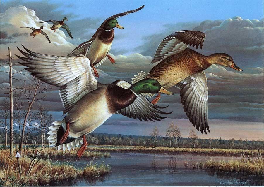 Днем нины, открытки охота на птиц