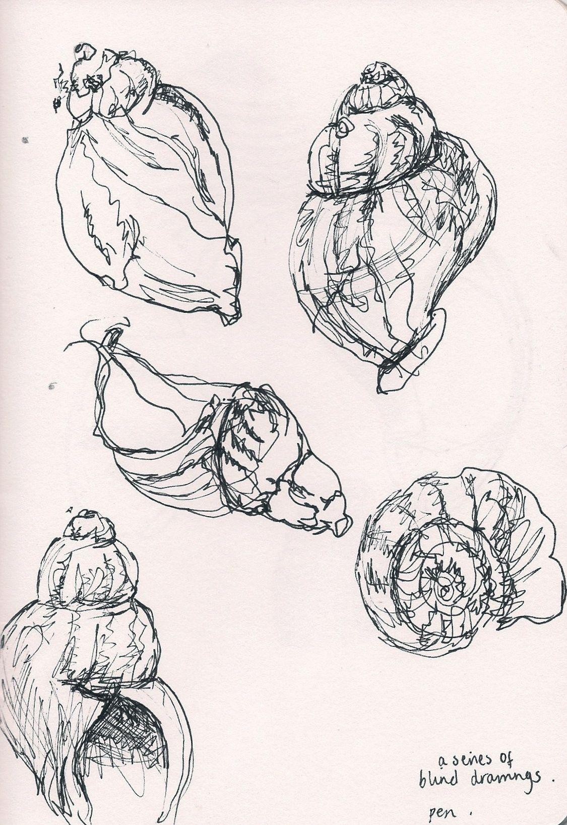 Fine Line Art : Beautiful fine line pen drawings of shells by my friend