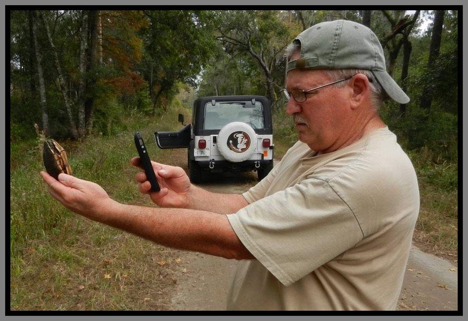 Snakes of Florida | Florida Backyard Snakes