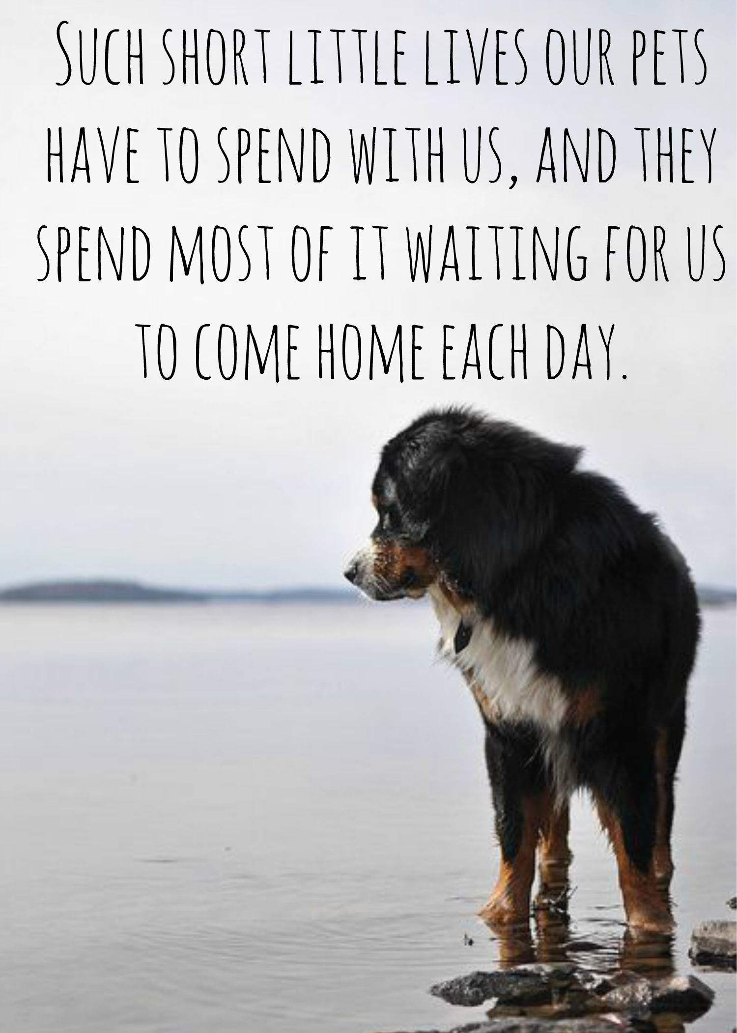 Short Dog Quotes Such short little lives our #pets have to spend with us #dog  Short Dog Quotes
