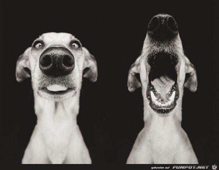 Photo of Archivo & # 39; Caras de perros divertidas! . & # 39; – uno de los 59981 archivos en la categoría & # 39; Lus …
