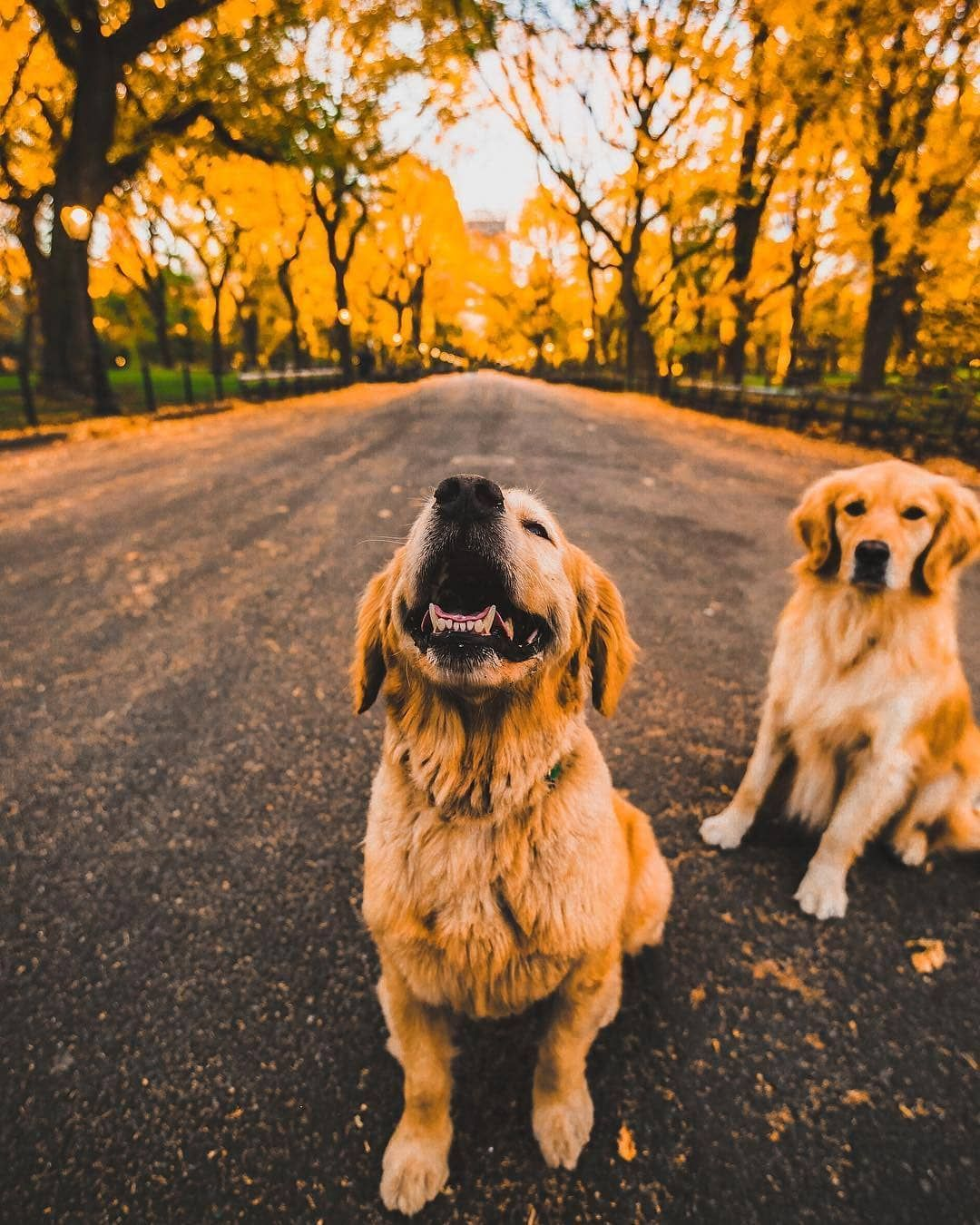 Dogs Do Speak But Only To Those Who Know How To Listen Follow Us
