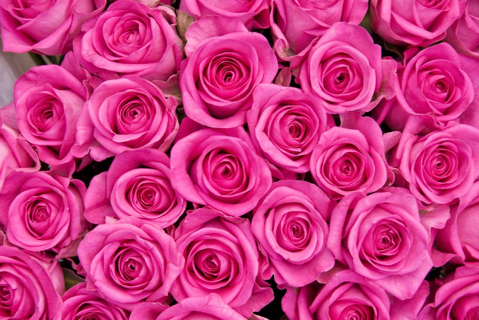 patternpinkroses.jpg 1,600×1,071 pixels Rose color