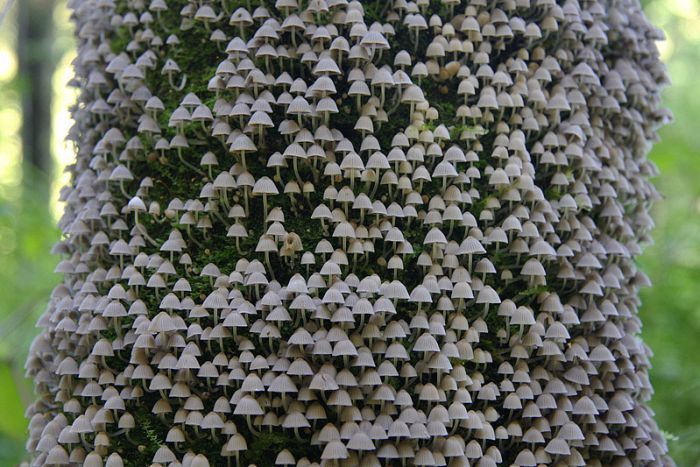 mushroom-tree.jpg (700×467)
