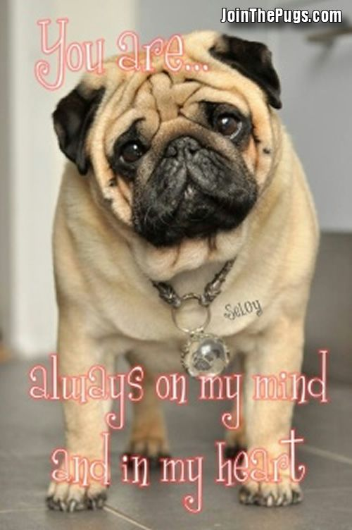 Thank You Wendy Davenschot With Seloy Pugs Wrinkly Dog Pug Love