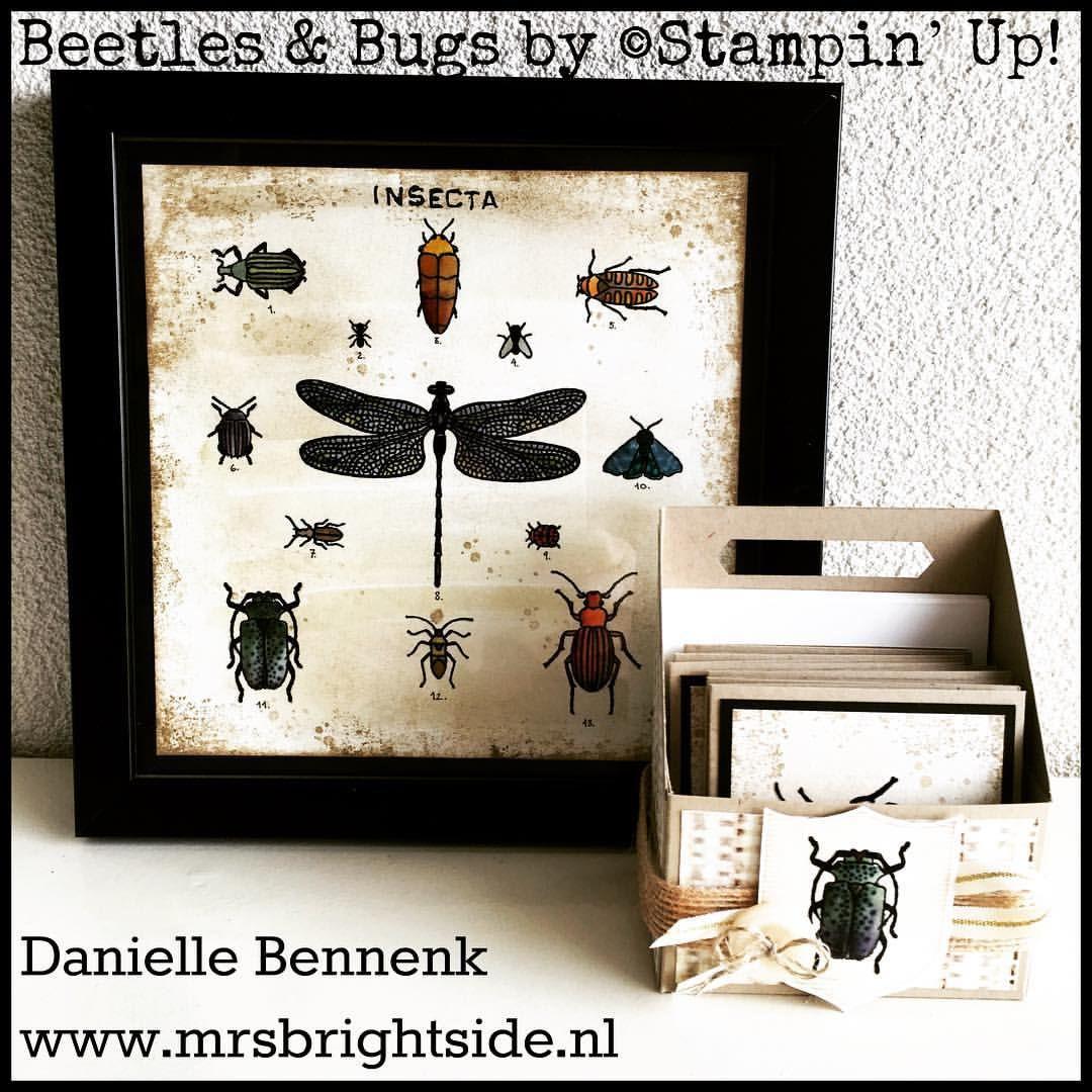 """Gefällt 37 Mal, 11 Kommentare - Danielle Bennenk (@mrsbgoesstamping) auf Instagram: """"Flora & Fauna blog hop featuring Beetles & Bugs stamp set by#stampinup"""""""