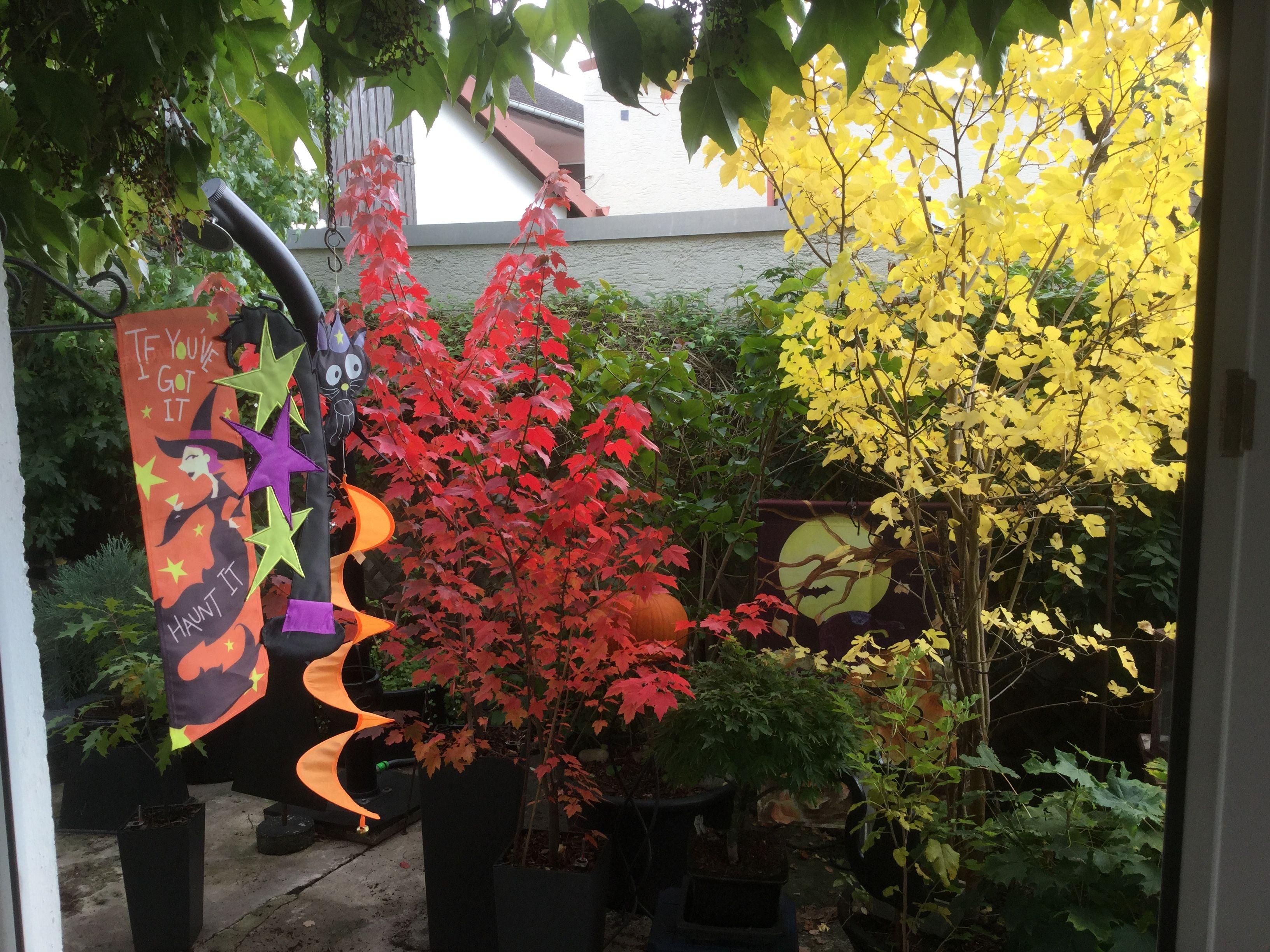 Unser Hof im Herbst/Halloween Look😉