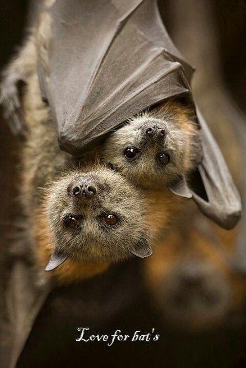 bat n baby