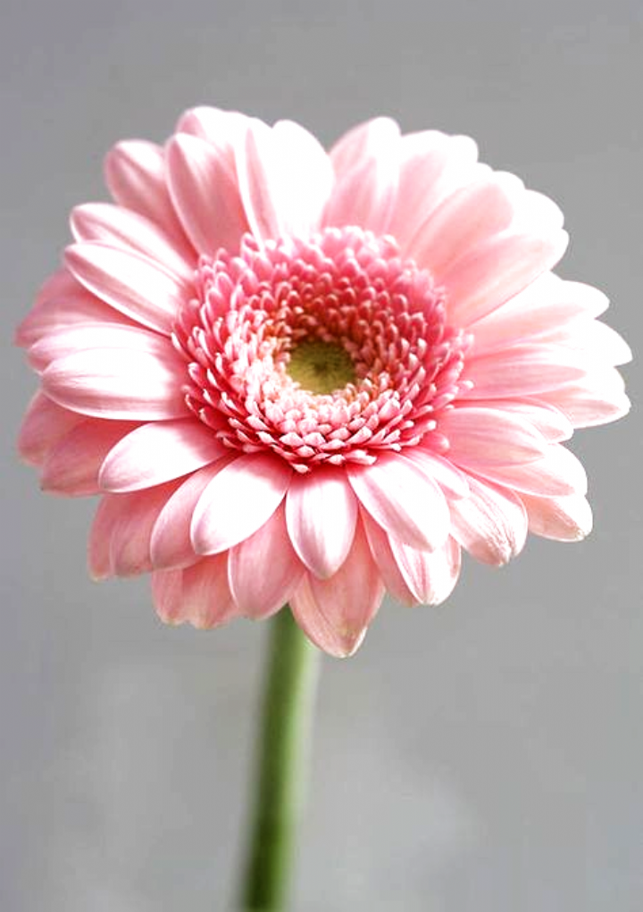 Flowers Flowers The Language Of Flowers By R Hamdan Via Flickr Victorian Chart On The Meaning Of Flowers In 2020 Beautiful Pink Flowers Flowers Pink Flowers