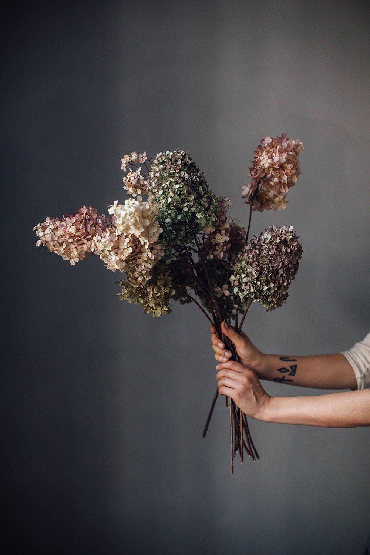 Fiori Di Ortensia Secchi the most beautiful autumn inspiration | fiori secchi, fiori