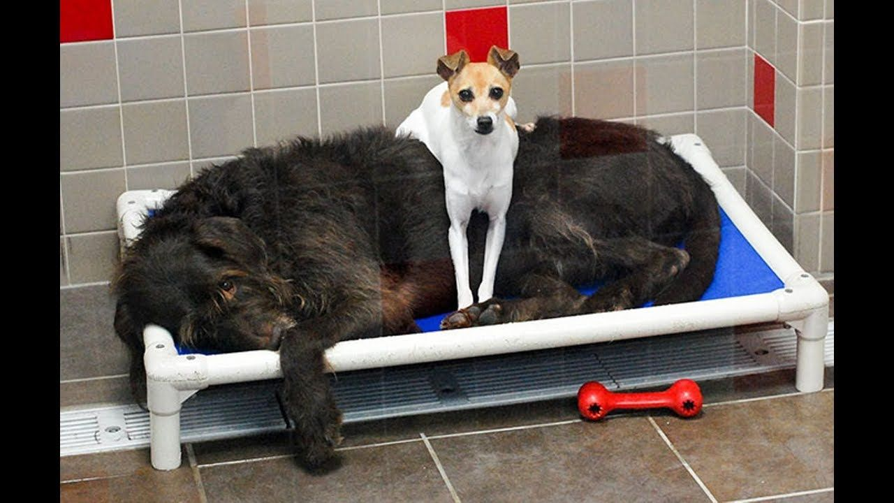 Two dogs can't stop cuddling in the shelter waiting a