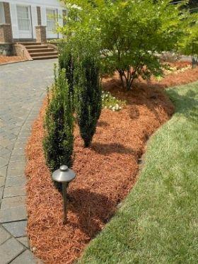 2742c5321775e82e0123bbc946d2d7a1 - Are Pine Needles Good For Gardens