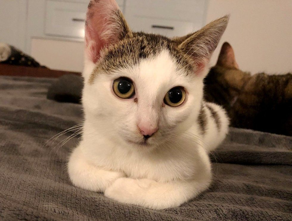 A Stray Kitten Couldn T Sit Up Straight Or Walk Until Someone Brought Her Home To Foster It Turned Her Life Around Joyce Kangar Dog Walking Kitten Dog Cat