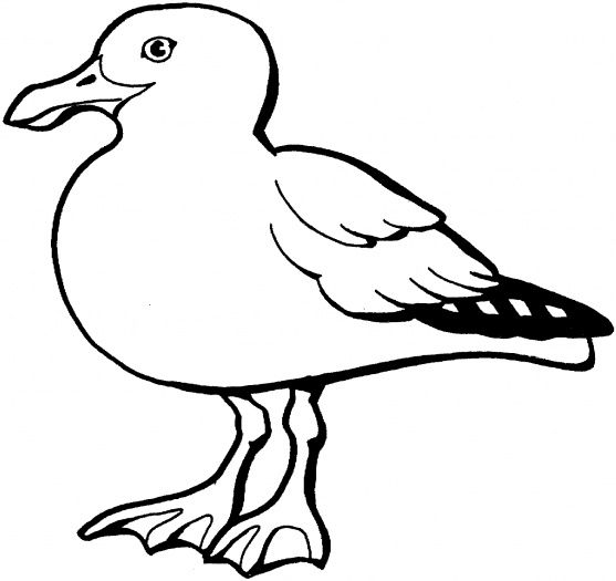 Seagull Vector Free Download Google Da Ara Free Coloring Pages Bird Coloring Pages Beach Coloring Pages
