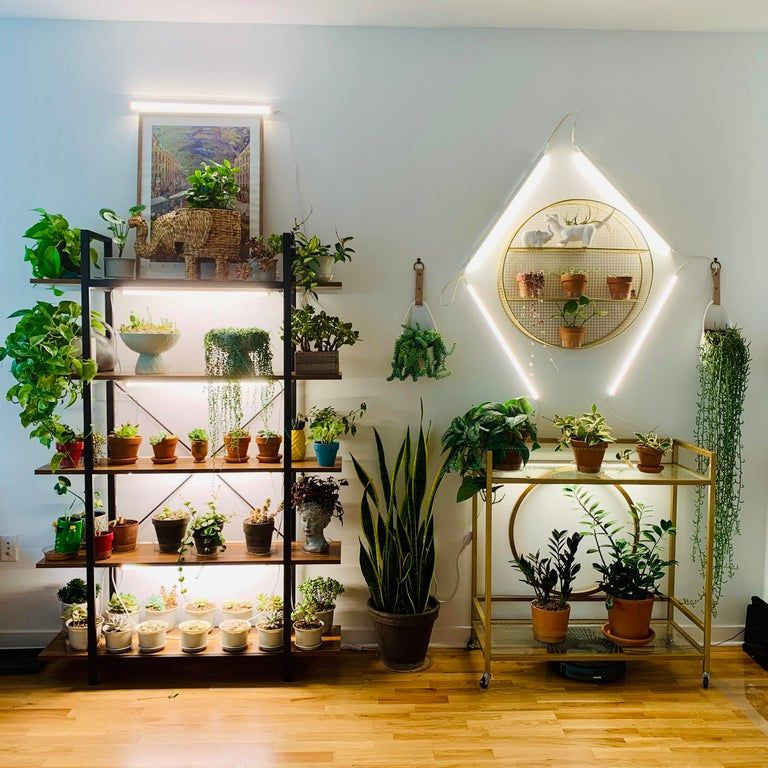 My plant wall is growing houseplants plant wall grow