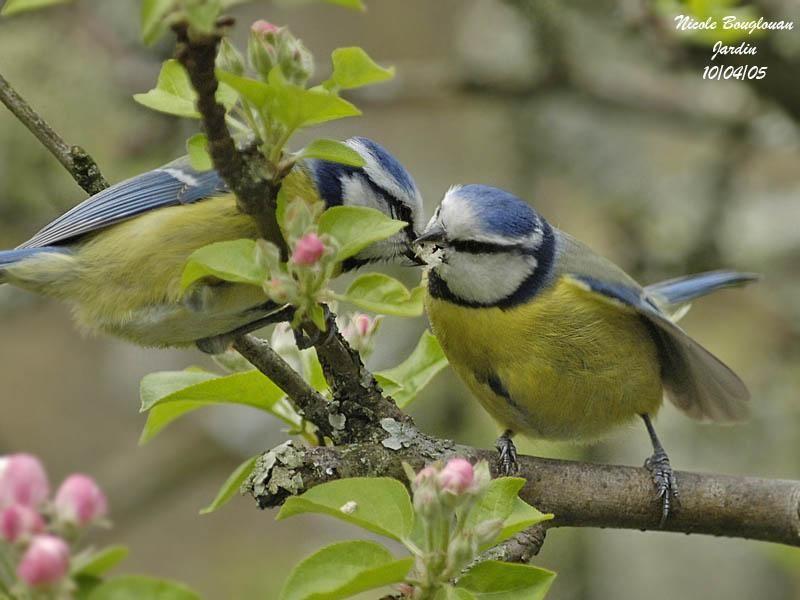 Pin On Oiseaux