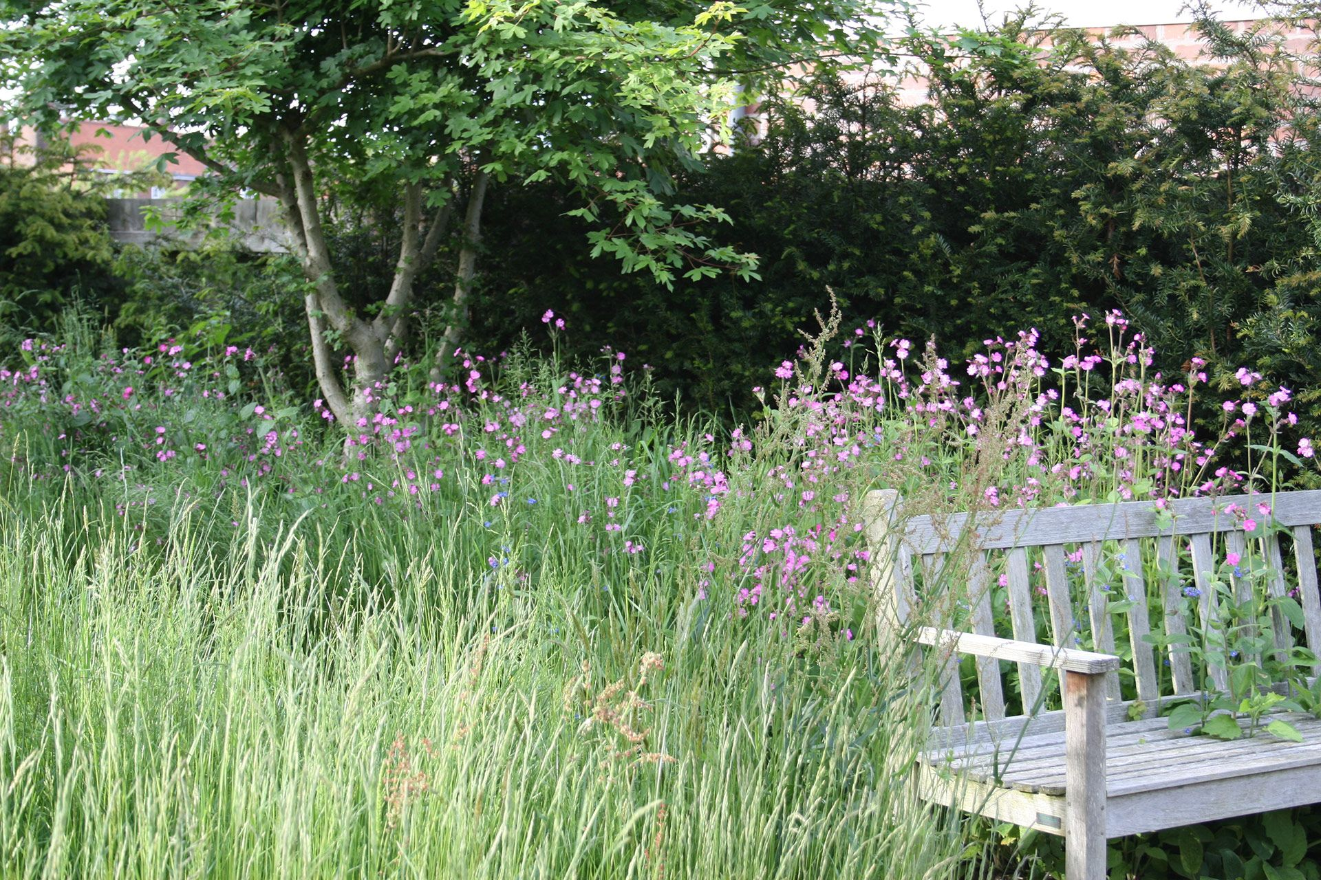 Angus Thompson Design Yorkshire project Urban Meadow