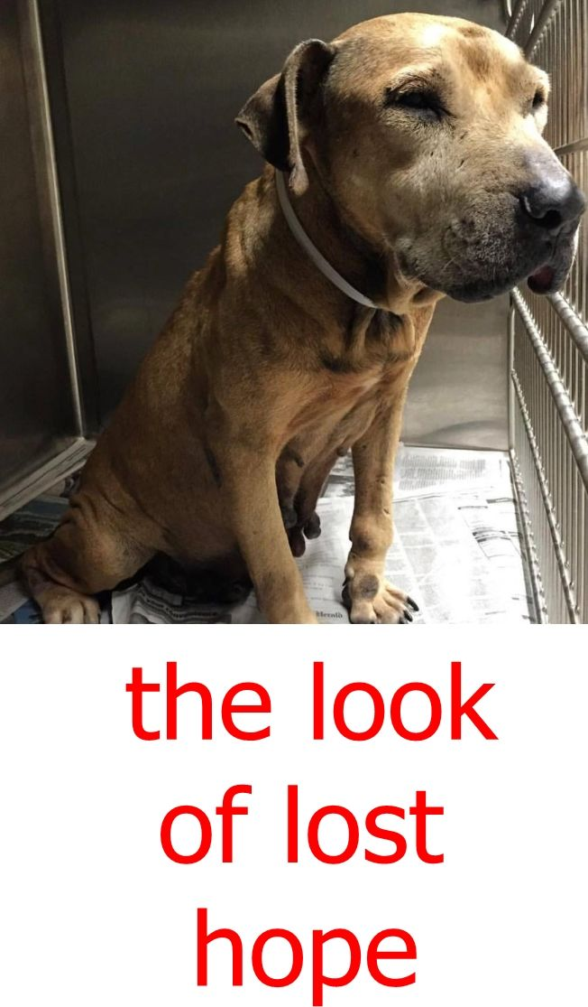 Sara A1808465 What Years Of Living On The Street And Fending For