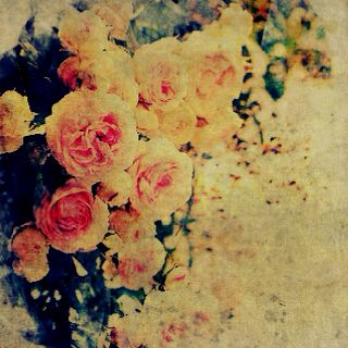 Cabbage roses with antiquing