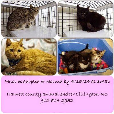 lizardmarsh: Lillington NC: Harnett County Animals need rescue/adoption by 4/15/14