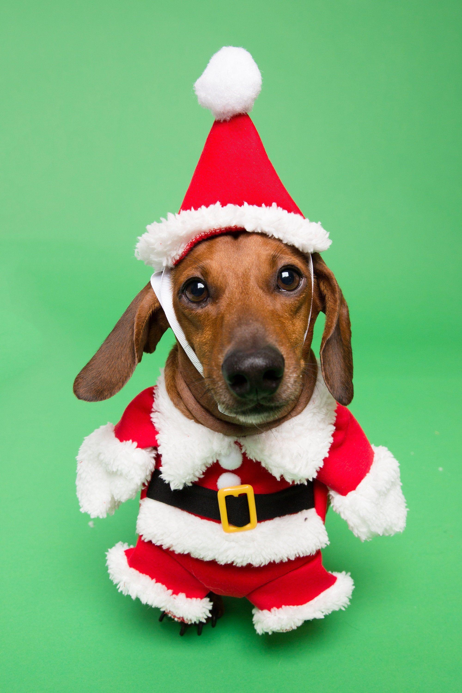 Santa Paws Costume FREE SHIPPING Santa dog costume