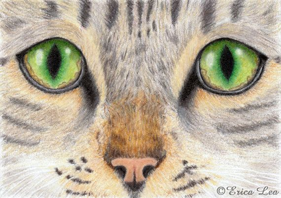 Pin By Poppy Wang On All Creatures Great And Small Cat Eyes Drawing Cat Tattoo Pencil Drawings Of Animals
