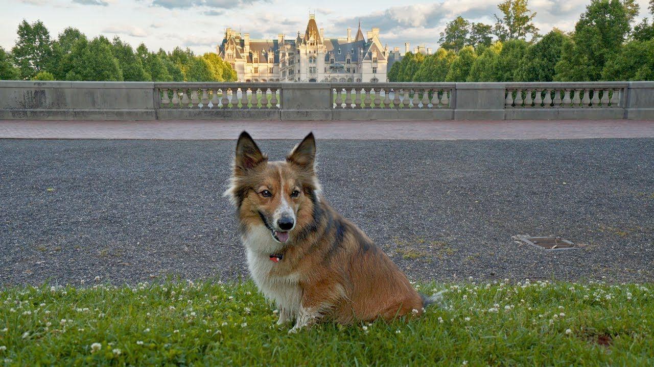 Sammy Visits Asheville A Day in DogFriendly Asheville