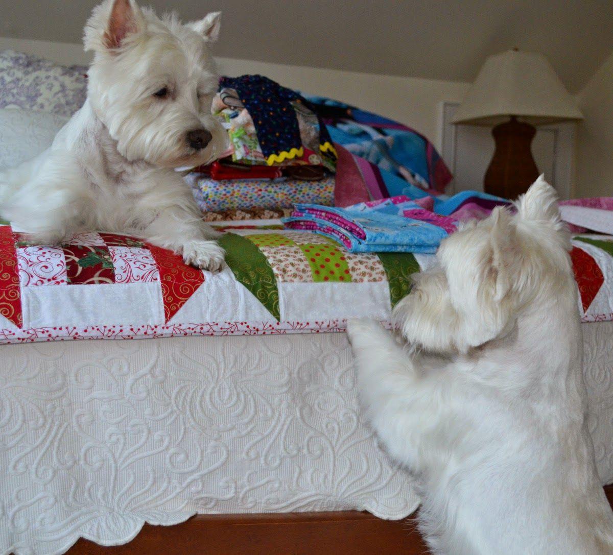 Nose To Nose Westie Dogs Westie Puppies Dog Friends