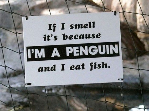 Funny-Animal-Signs-020.jpg (625×469)