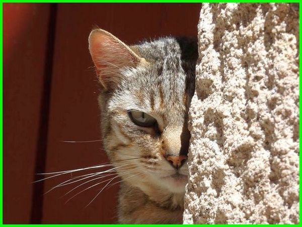 Gambar Kucing Togel godean.web.id