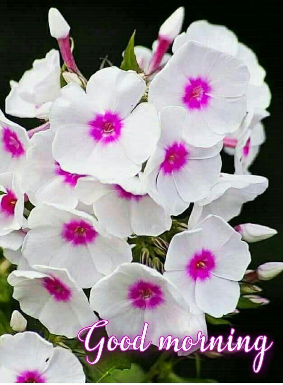 Pin By Aditi Kumari On Good Morning Good Morning Flowers Good Morning Images Flowers Free Good Morning Images