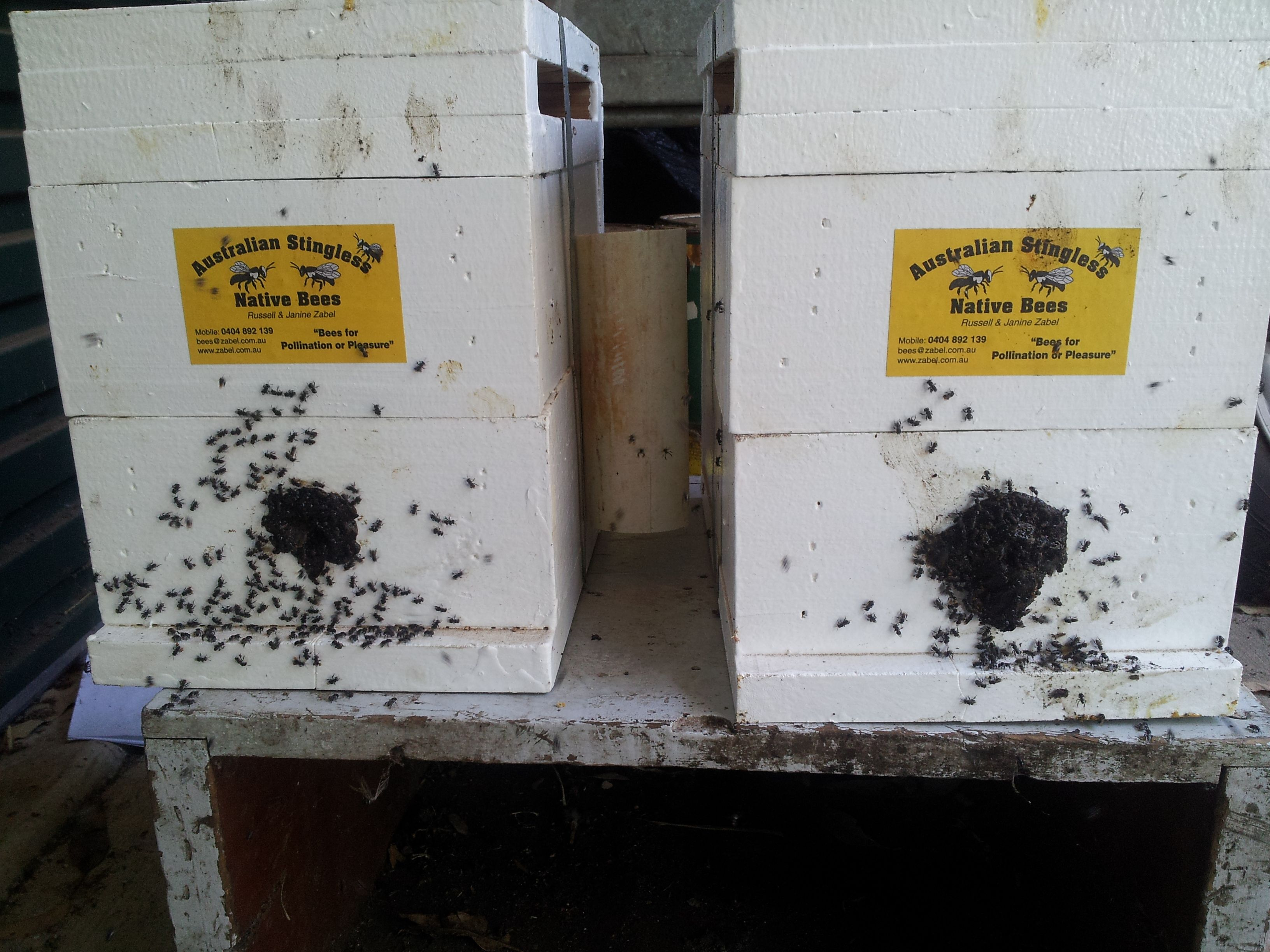 Some brood, honey pots and pollen storage was placed in each of two hives