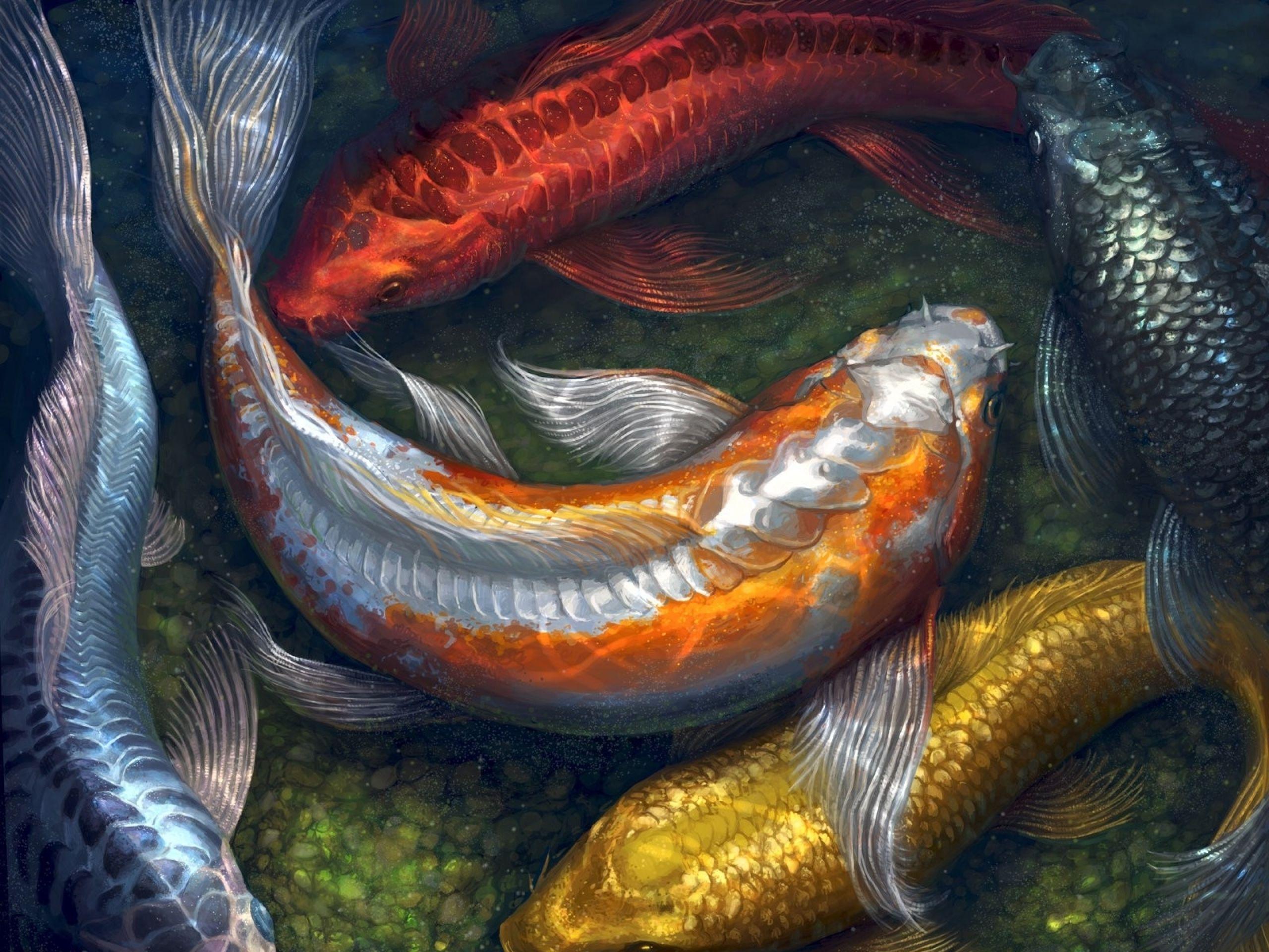 Water Paintings Fish Koi Artwork Pebbles 1600x1250 Wallpaper