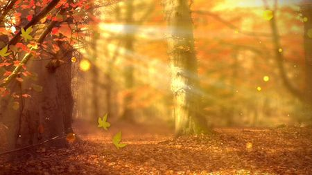 Church Media | Life Scribe Media | Fall Forest | Autumn Leaves | Worship  Backgrounds | Motio… | Worship backgrounds, Church backgrounds, Christian  background images