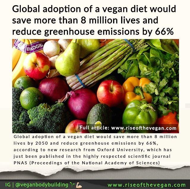 Save Lives With Vegan Diet Mit Bildern Hering
