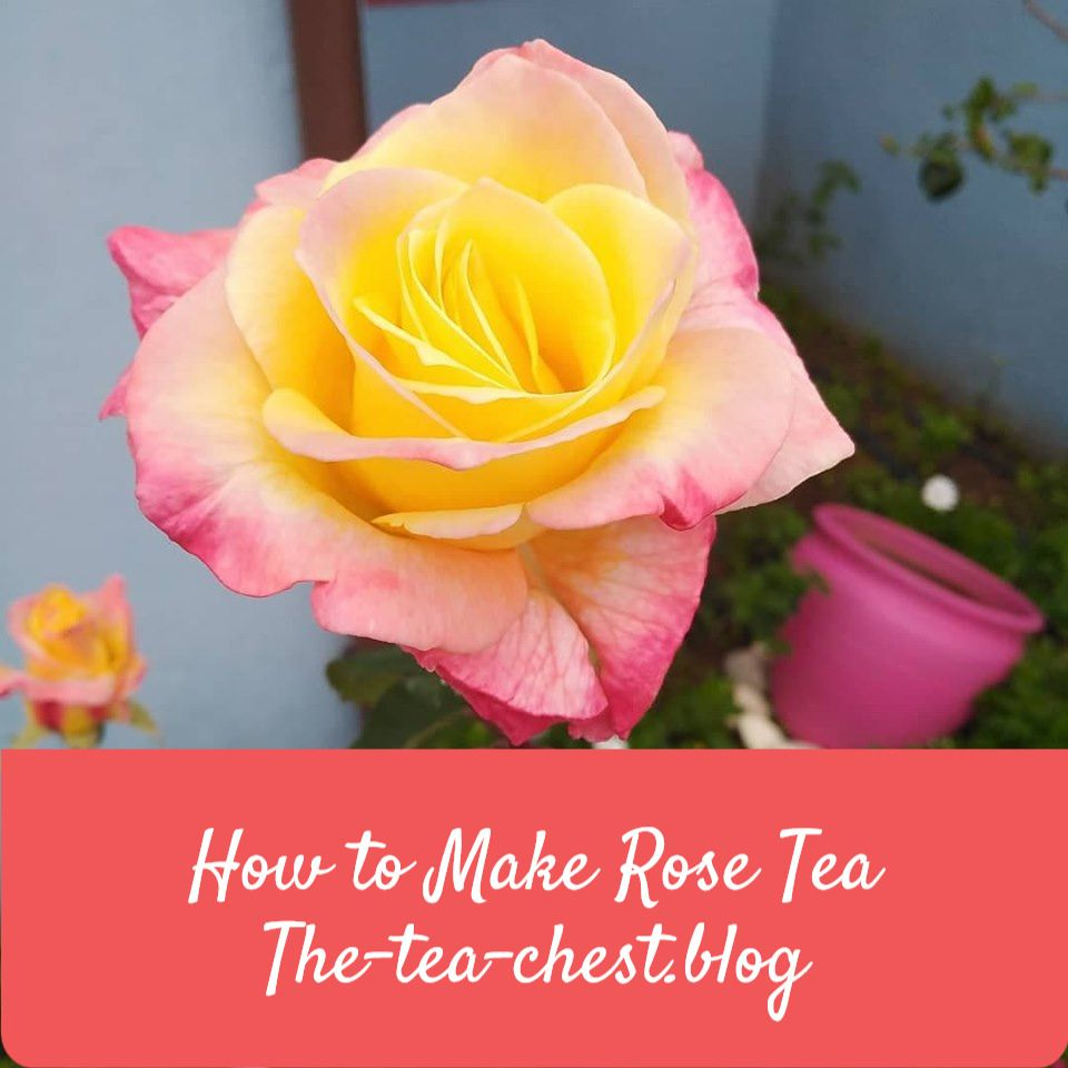How To Make Rose Tea In 2020 How To Make Rose Rose Tea Rose
