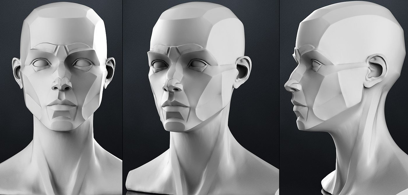 Planes of the head - Female | 3D model | Portrait | Pinterest ...