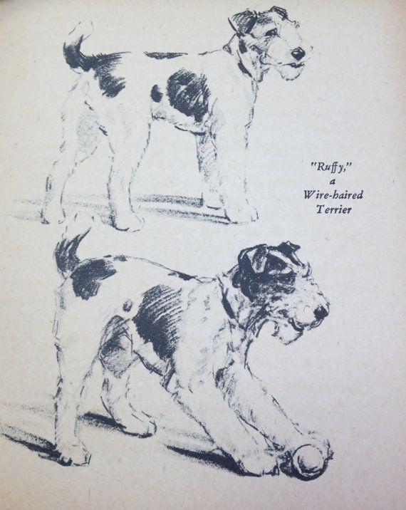 Wire Haired Terrier Dog Print 1940 Diana Thorne Vintage Book Plate B&W Drawing Illustration Print Nursery Children's Room Decor Wall Art
