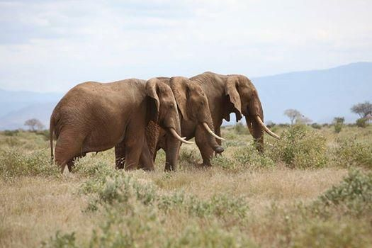 Thank you #NewYork Govr Andrew Cuomo for banning sale of #ivory yesterday http://takingnote.blogs.nytimes.com/2014/08/12/battling-the-ivory-trade/… pic.twitter.com/4csKtutiPP