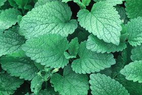 Try mInt for digestive concerns and more!
