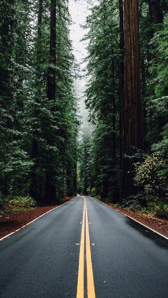 Green Forest Road Tall Trees Iphone 5 Wallpaper Iphone