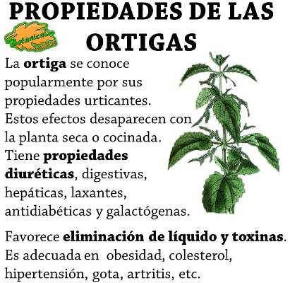 Propiedades de la ortiga planta medicinal salud y for Planta decorativa con propiedades medicinales