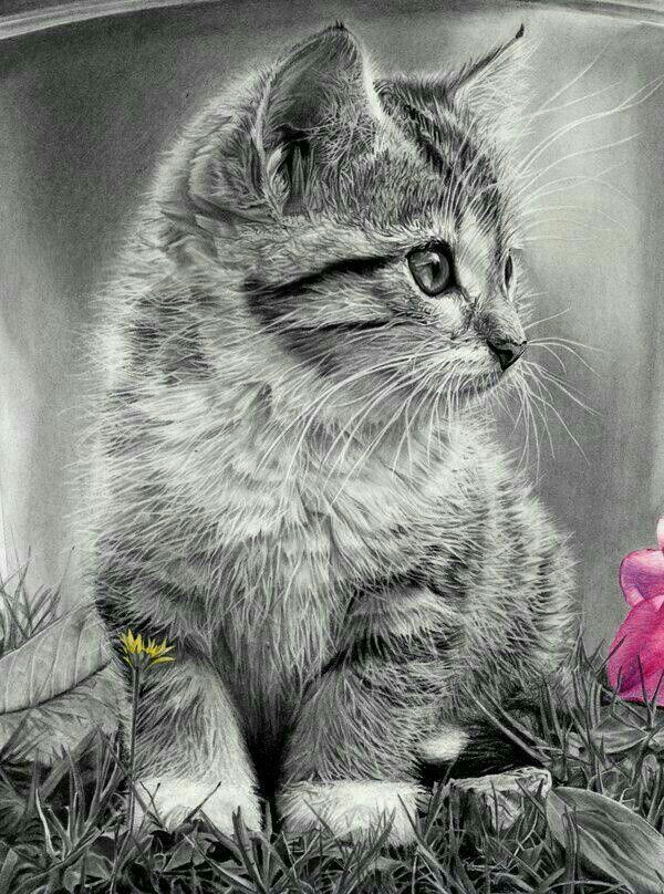 Pin by debie gorman on animals (With images) Pencil