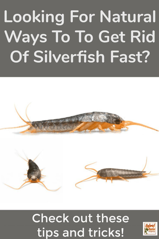 274b2649f74e510bbb55d99356464b7a - How To Get Rid Of Silverfish In House Uk
