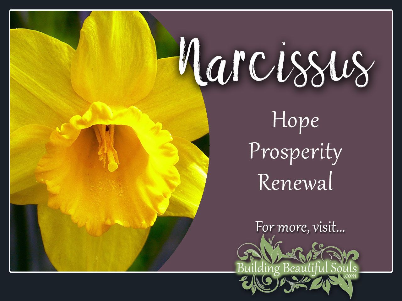 Narcissus Meaning Symbolism Flower Meanings Flower Meanings Narcissus Flower Narcissus